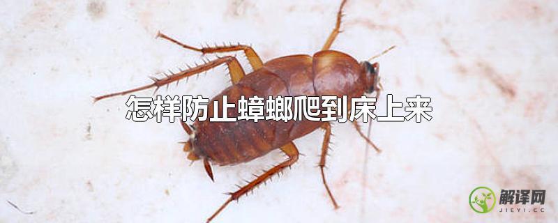 怎样防止蟑螂爬到床上来?