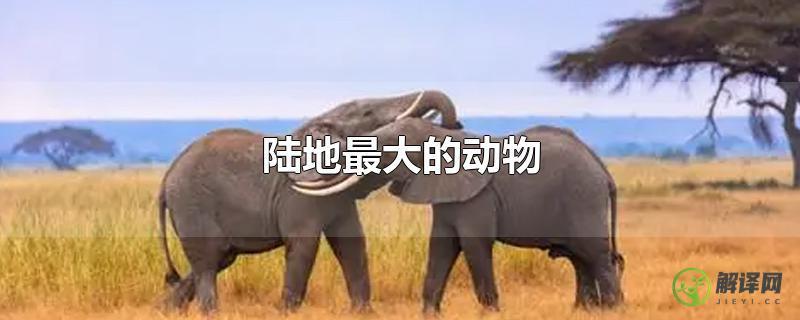 陆地最大的动物?