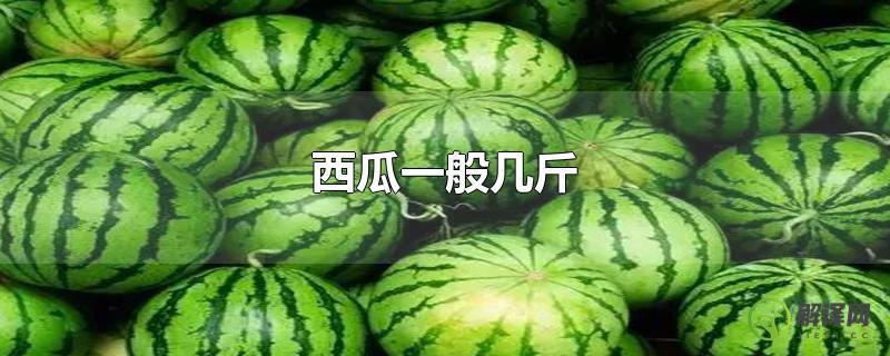 西瓜一般几斤?