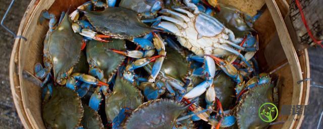 蟹饭怎么做好吃,蟹闷饭的做法?