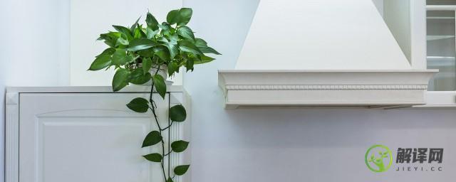 旺财风水植物,旺财风水植物有哪些?