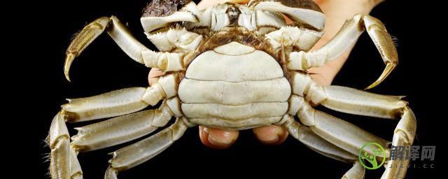 室内螃蟹养殖技术,室内螃蟹如何养殖?