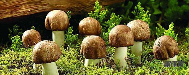 野生菌十大名菌,野生菌十大名菌分别是哪些?