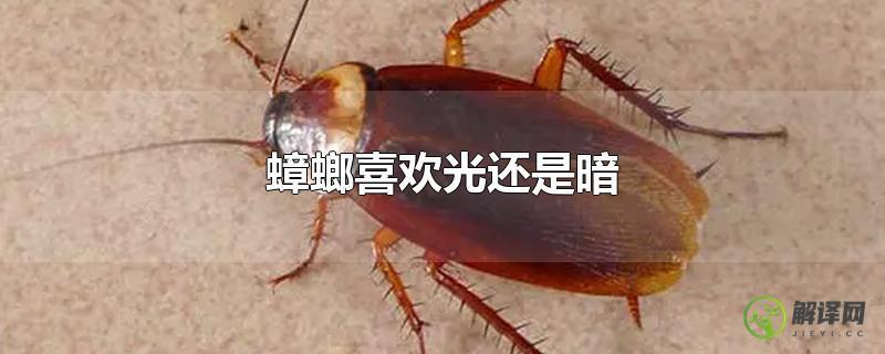 蟑螂喜欢光还是暗?