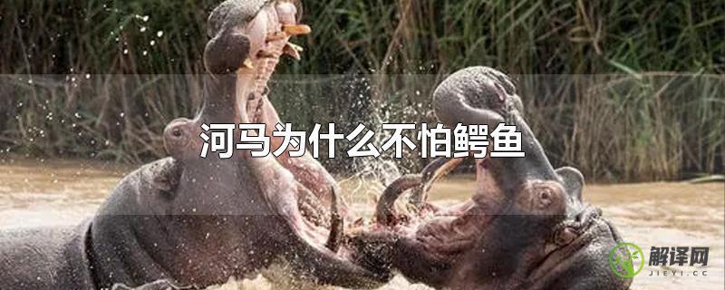 河马为什么不怕鳄鱼?