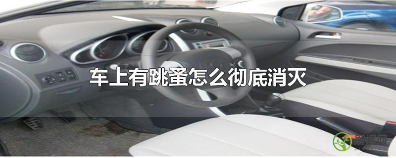 车上有跳蚤怎么彻底消灭?