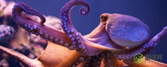章鱼血液的颜色是什么,章鱼血液的颜色介绍?